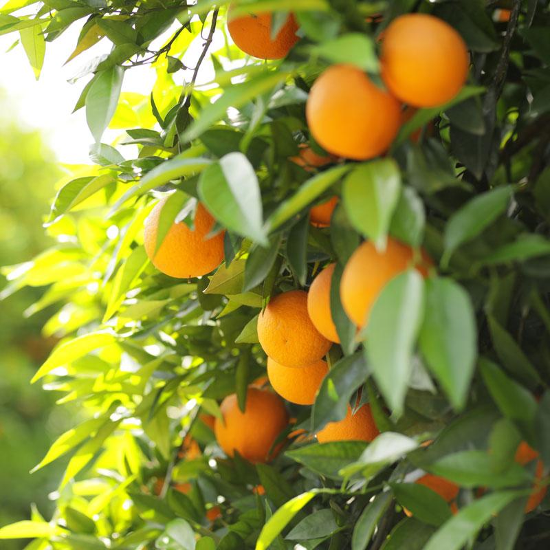 AS Saft Orangen